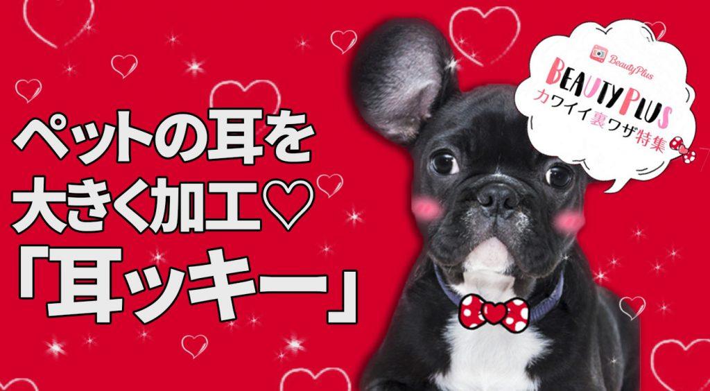 【BeautyPlus】ペットのお耳をおっきく加工♡「#耳ッキー」で遊ぼう