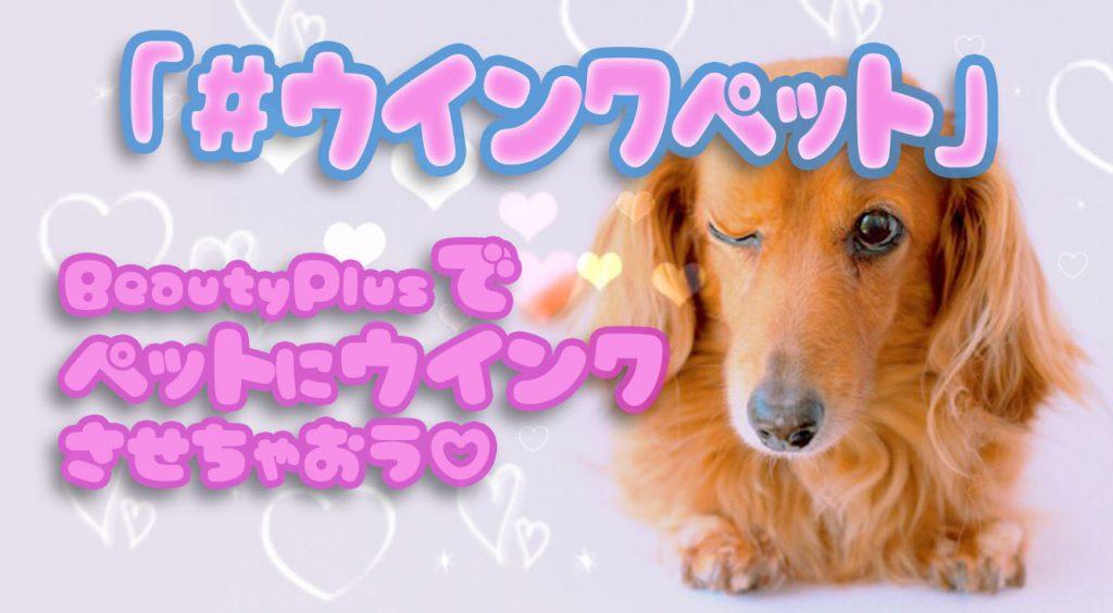 【BeautyPlus】かわいい♡犬や猫などペットの写真をウインク加工してみよう♡「#ウインクペット」