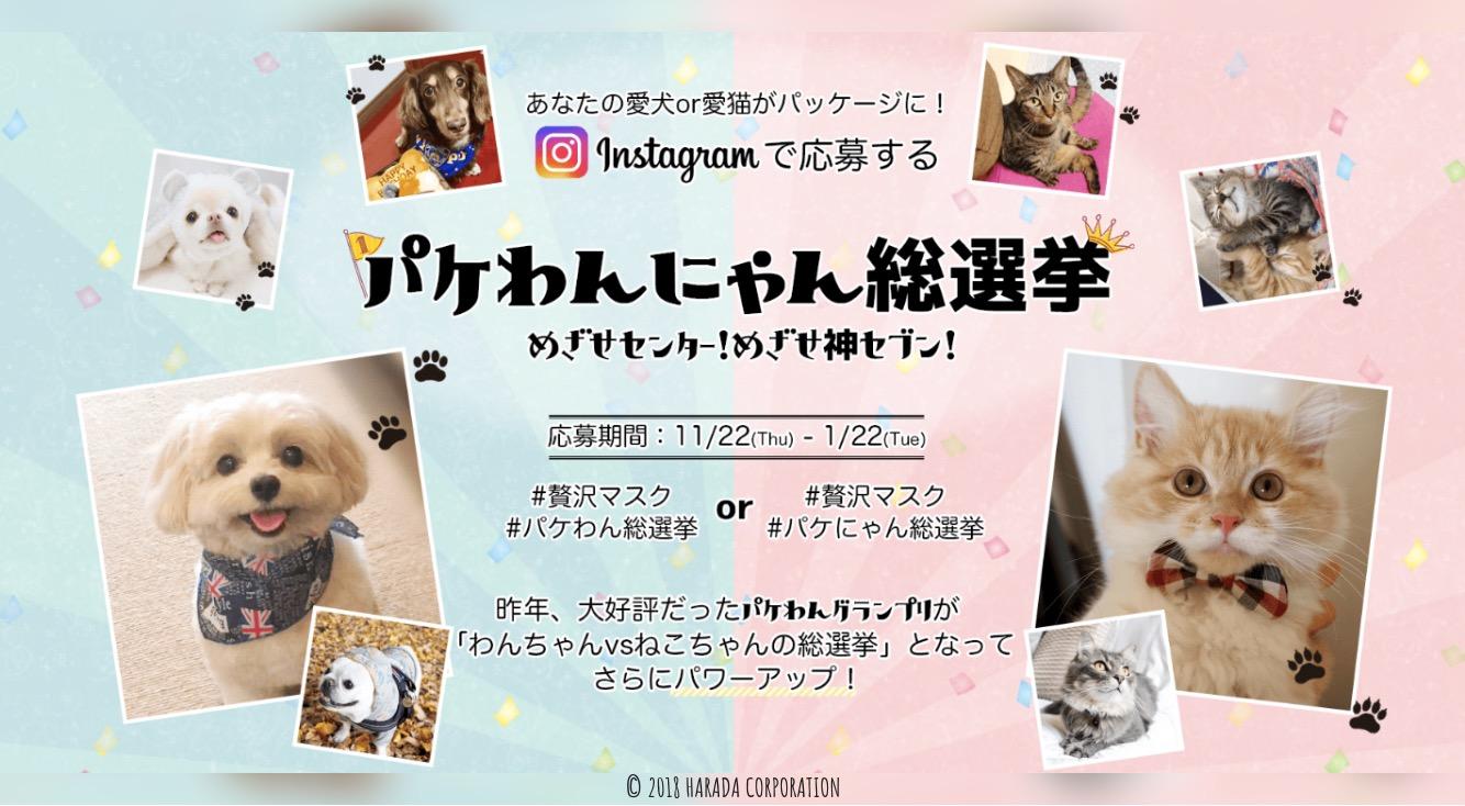 あなたの愛犬&愛猫の写真が商品のパッケージに!?「贅沢マスク」の【パケわんにゃん総選挙】に参加しよう🐶🐱