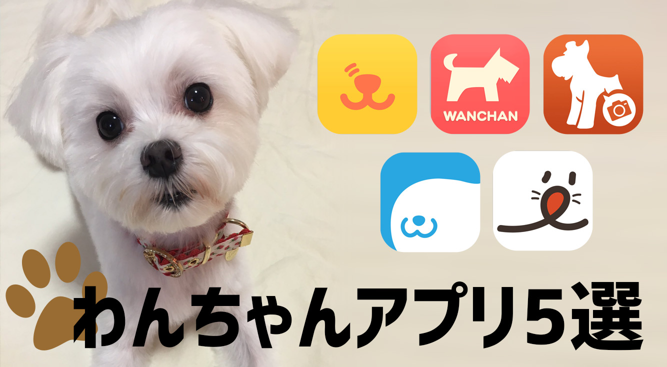 愛犬ともっとハッピーに過ごそう♡愛犬家さんにオススメアプリ5選
