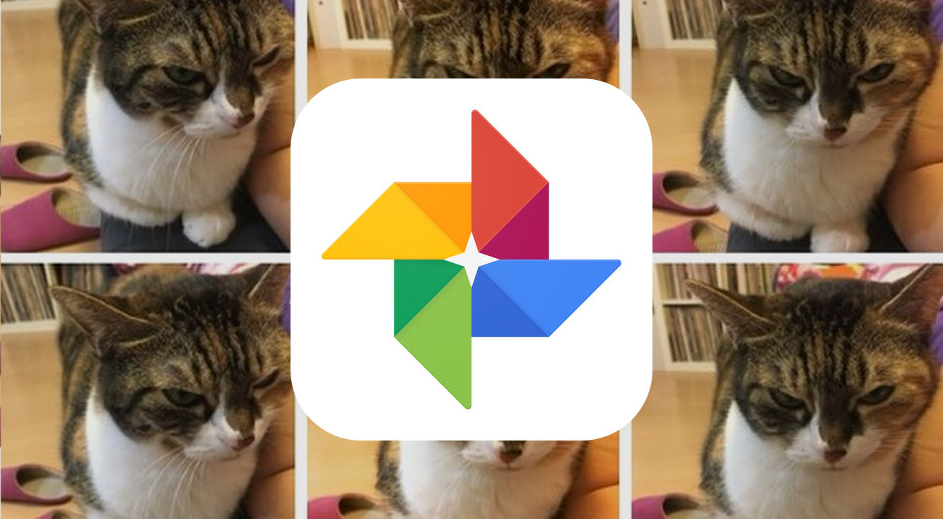 Googleフォトにペットの顔認識機能が登場!愛犬・愛猫の写真が簡単にまとめられるように!