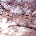 【12星座別】春に運命の出会いがある星座ランキング