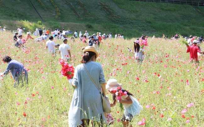 横須賀市「くりはま花の国」の花摘み大会