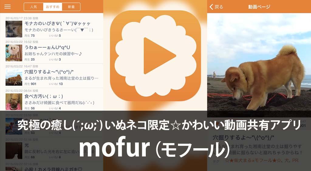 究極の癒し(´;ω;`)いぬネコ限定☆かわいい動画共有アプリ 【mofur】