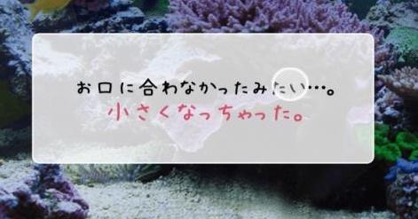 umiushi-04