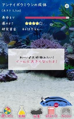 umiushi-05