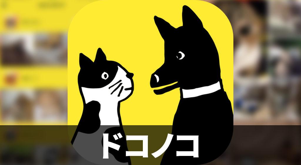 犬ねこ界のインスタ登場!近所のどうぶつとゆるくつながる写真SNS 【ドコノコ】