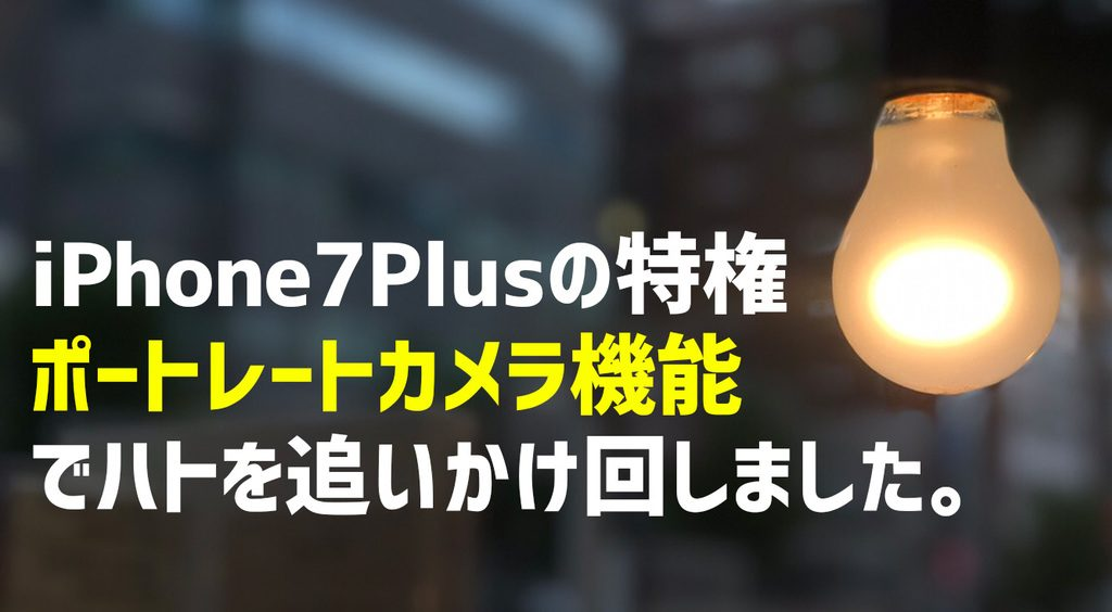 iPhone7Plusの特権「ポートレートカメラ機能」でハトを追いかけ回しました。
