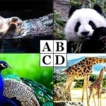 心理テスト|どの動物が好き?答えで分かる!あなたの性格傾向