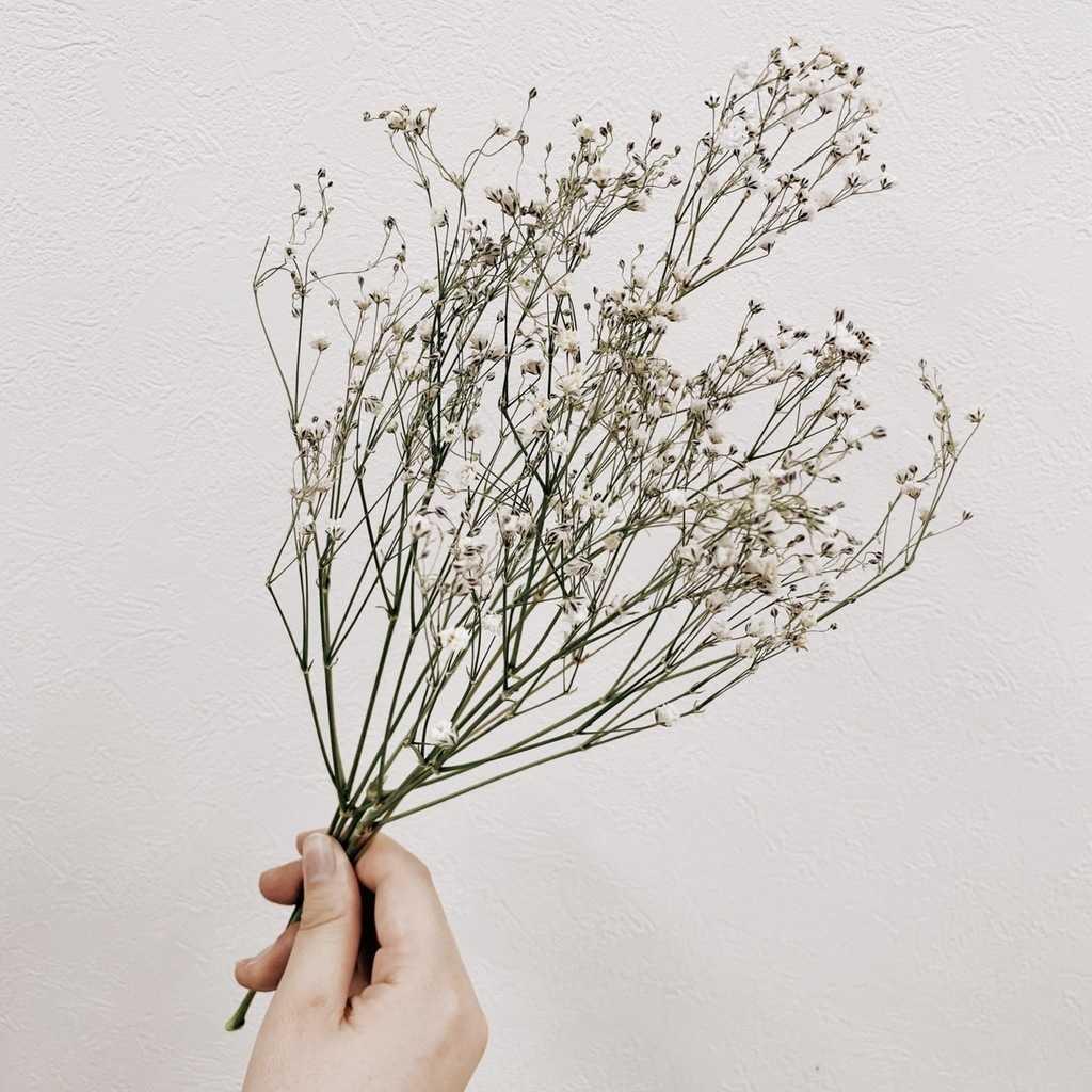 Dryflower-instagenic