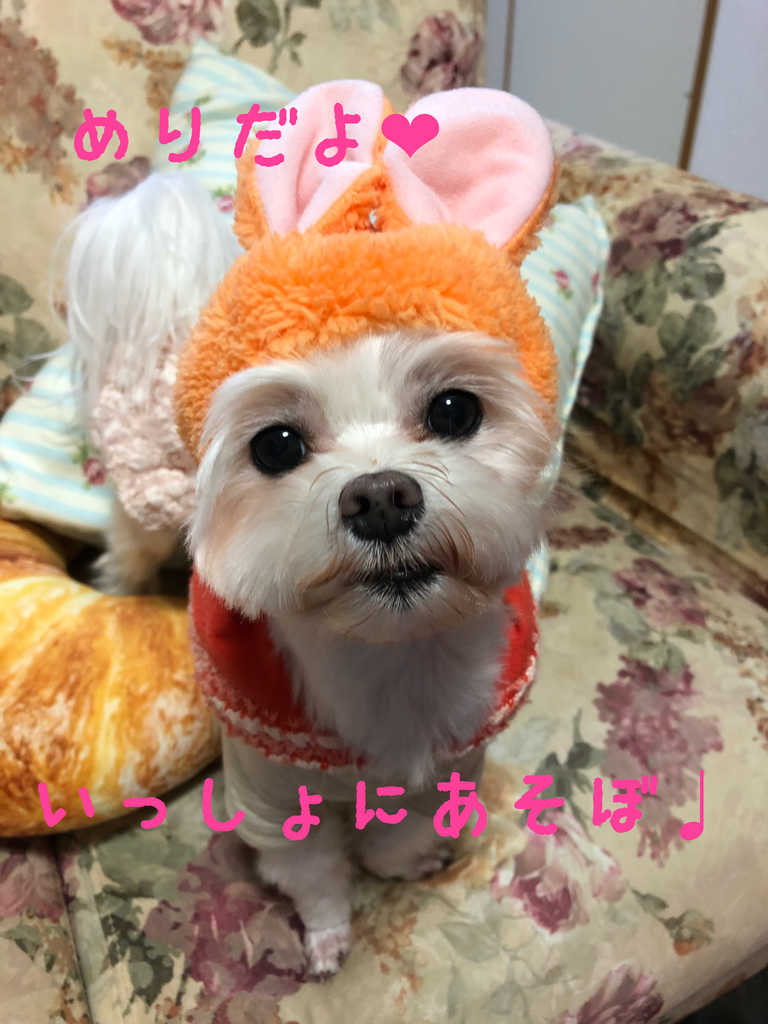 pet-photo-kawaii