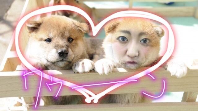 人面犬の合成写真をインスタで作りました