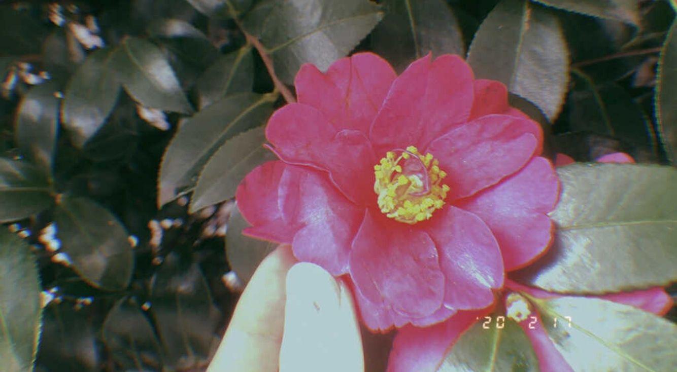 レトロな写真が撮れるカメラアプリの元祖!「Gudak Cam」の無料版を試してみた!
