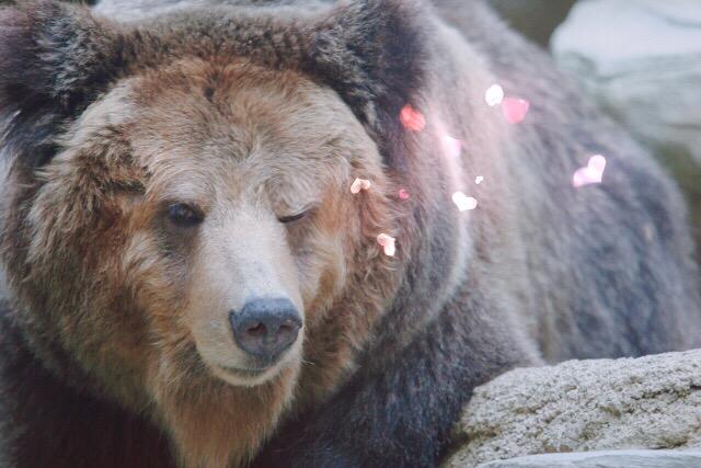 クマのウィンク加工