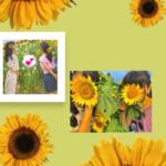 夏の思い出をインスタストーリーに♥夏っぽストーリー加工を紹介!