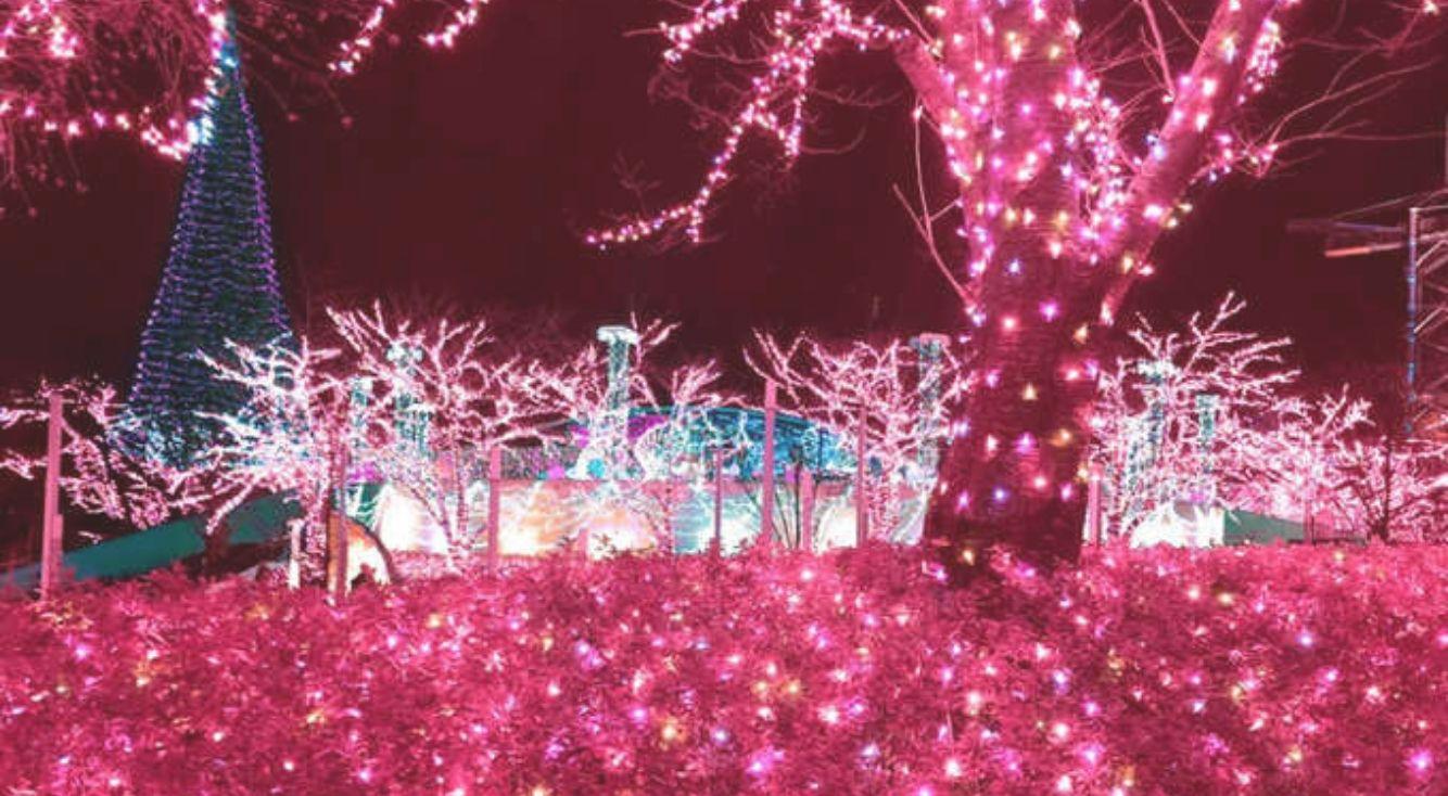 ピンク好き必見!加工アプリ『Pinkl(ピンクル)』で何気ない風景をピンクに染めて