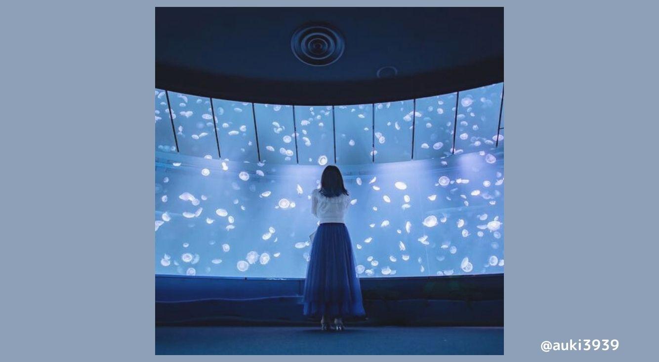サンシャイン水族館のクラゲエリアがインスタ映え♡美しすぎる空間「海月空間」のご紹介♡