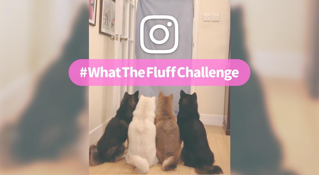 【インスタ】飼い主が消えた?!驚くわんこがギャンカワ「#WhatTheFluffChallenge」