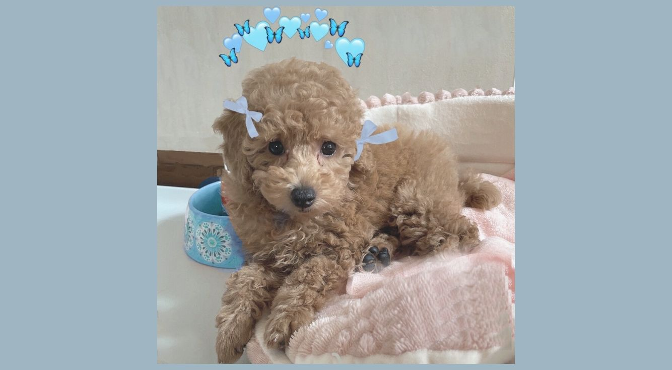 愛犬をステッカーでさらに可愛く♥PicsArtで簡単にできる加工法を紹介!