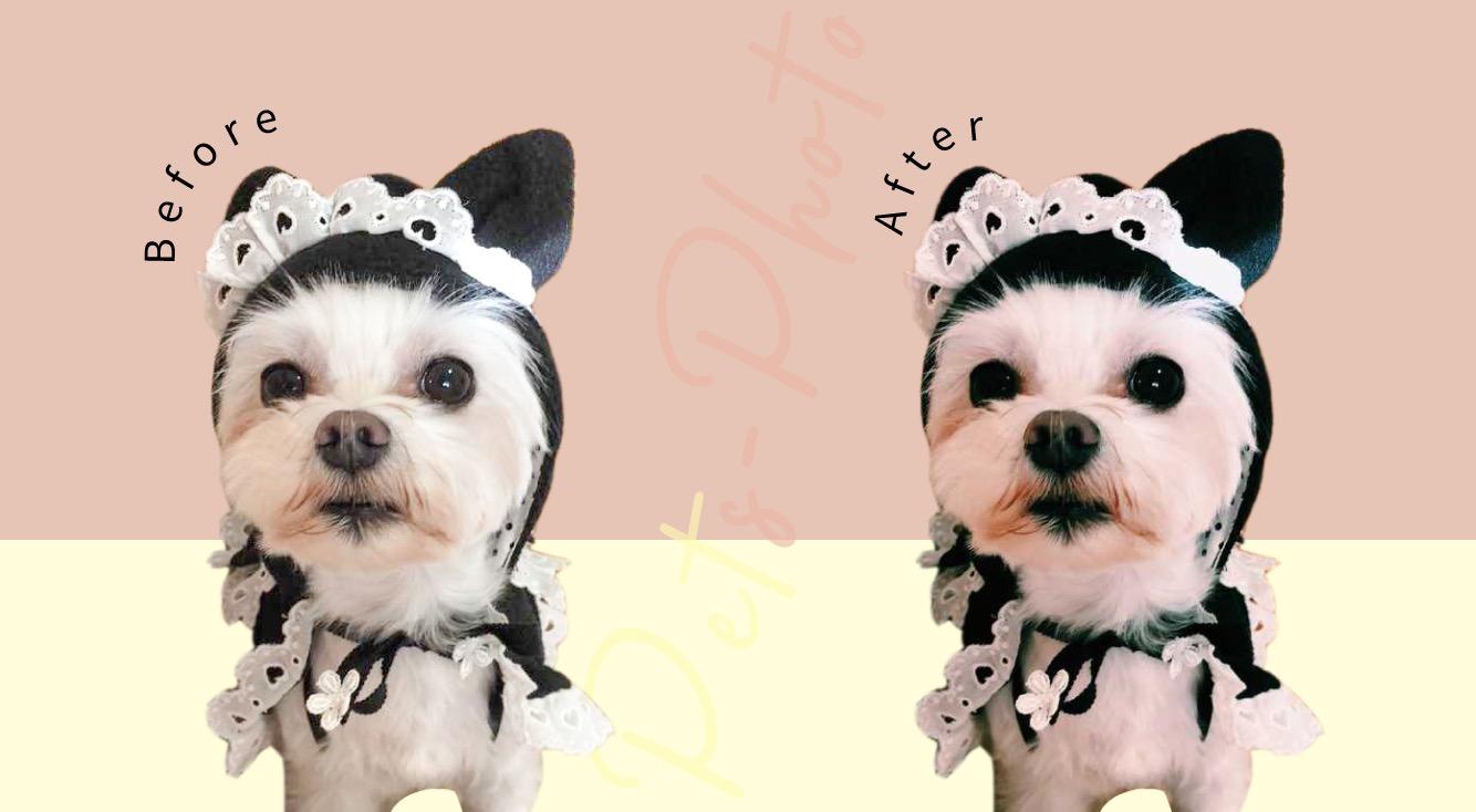 【インスタ】いいね!フォロワーを増えやすく!無料でペット(犬・猫)の写真をおしゃれに加工しよう