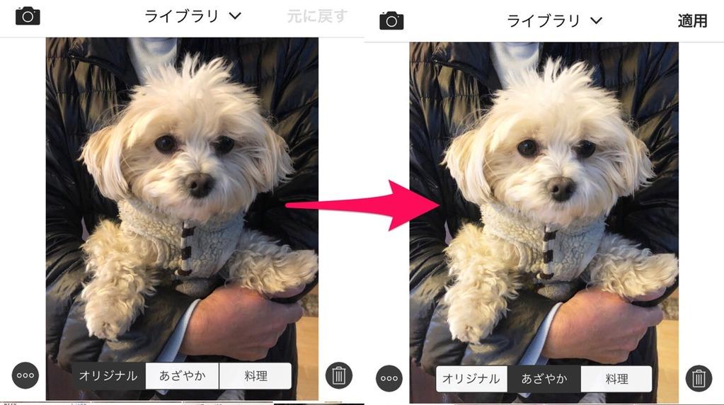 鮮やかに加工された犬の写真