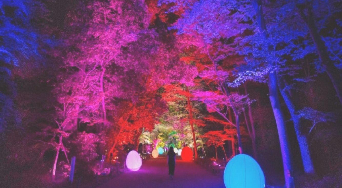 チームラボが古都・京都の世界遺産でアート展を開催!