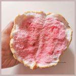 【韓国】ダルゴナコーヒーの後は「雲パン(구름빵)」が来る!ふわふわもこもこ食感で糖質ほぼゼロ!?作り方も紹介!