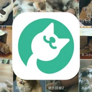 猫(に)まっしぐら!猫好き専用SNS【ねこすた】