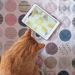 猫ちゃんが遊べるユニークなアプリ10選をご紹介!