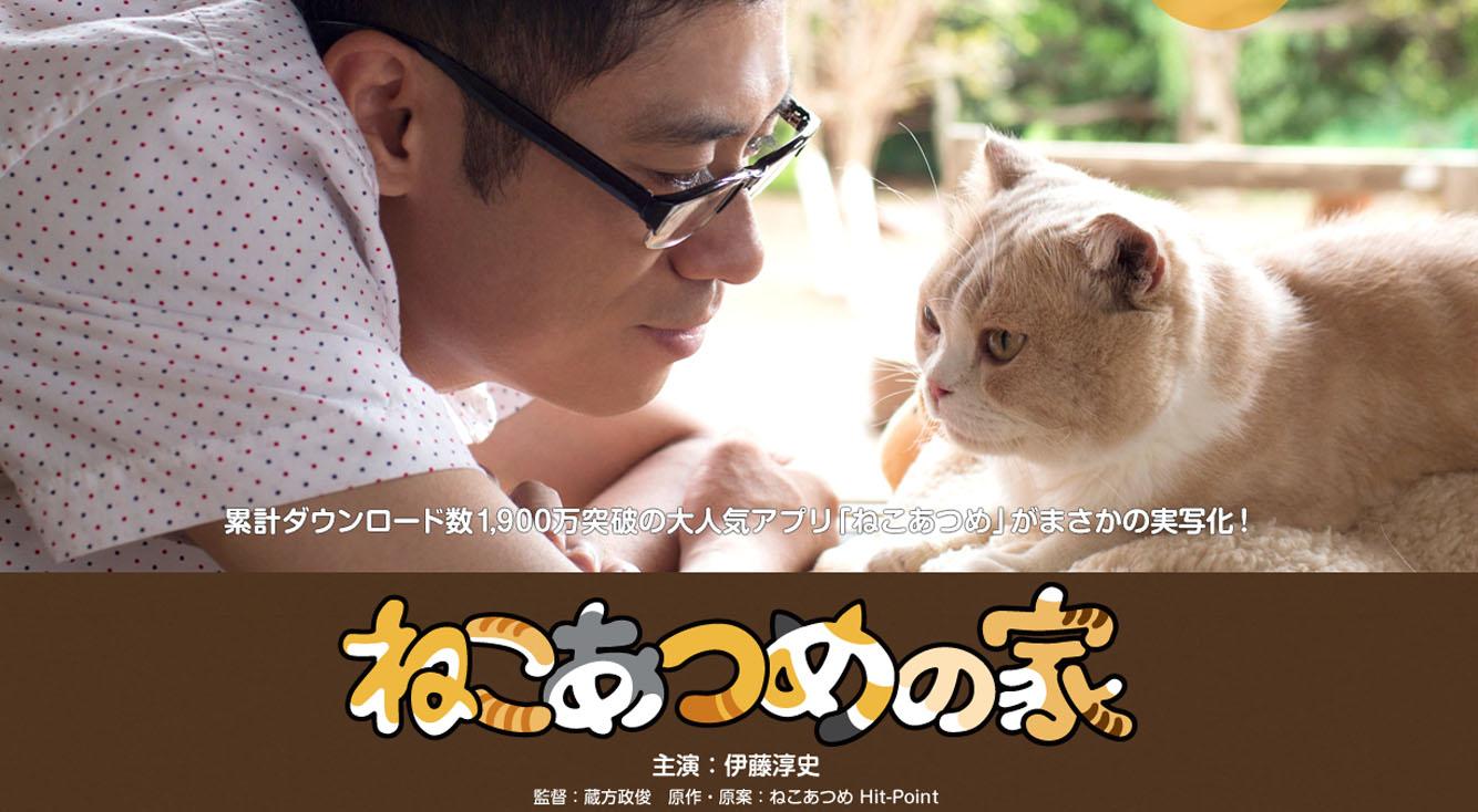 ねこあつめが実写映画化、伊藤淳史がねこまみれ?【ねこあつめの家】