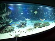 サンシャイン水族館施設案内