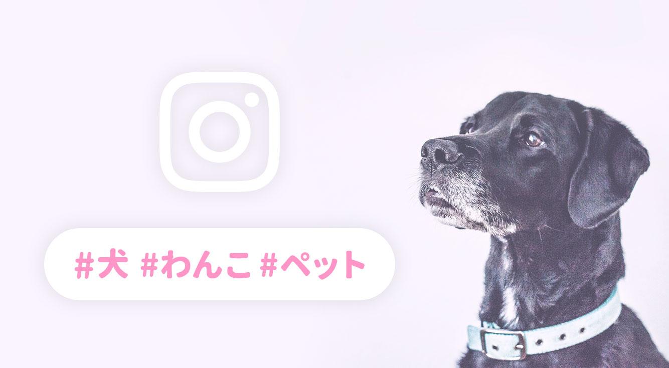 【コピペするだけ】インスタのフォロワーが増えやすくなる!犬の人気ハッシュタグ一覧&ペットを可愛く撮れる「カメラアプリ」