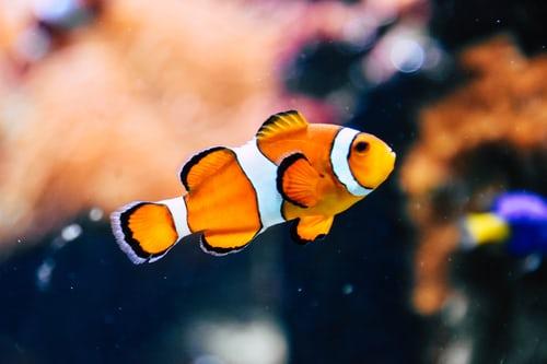 アプリ「スマホをやめれば魚が育つ」を使って携帯依存を脱却!集中して勉強しよう!Android版はないの?