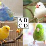 心理テスト|あなたが飼ってみたい小鳥はどれ?答えでわかる恋愛傾向診断