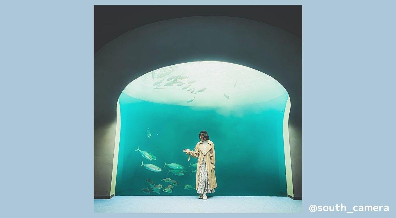 まるで美術館?神秘的な水族館「四国水族館」のおすすめ撮影スポットを紹介!