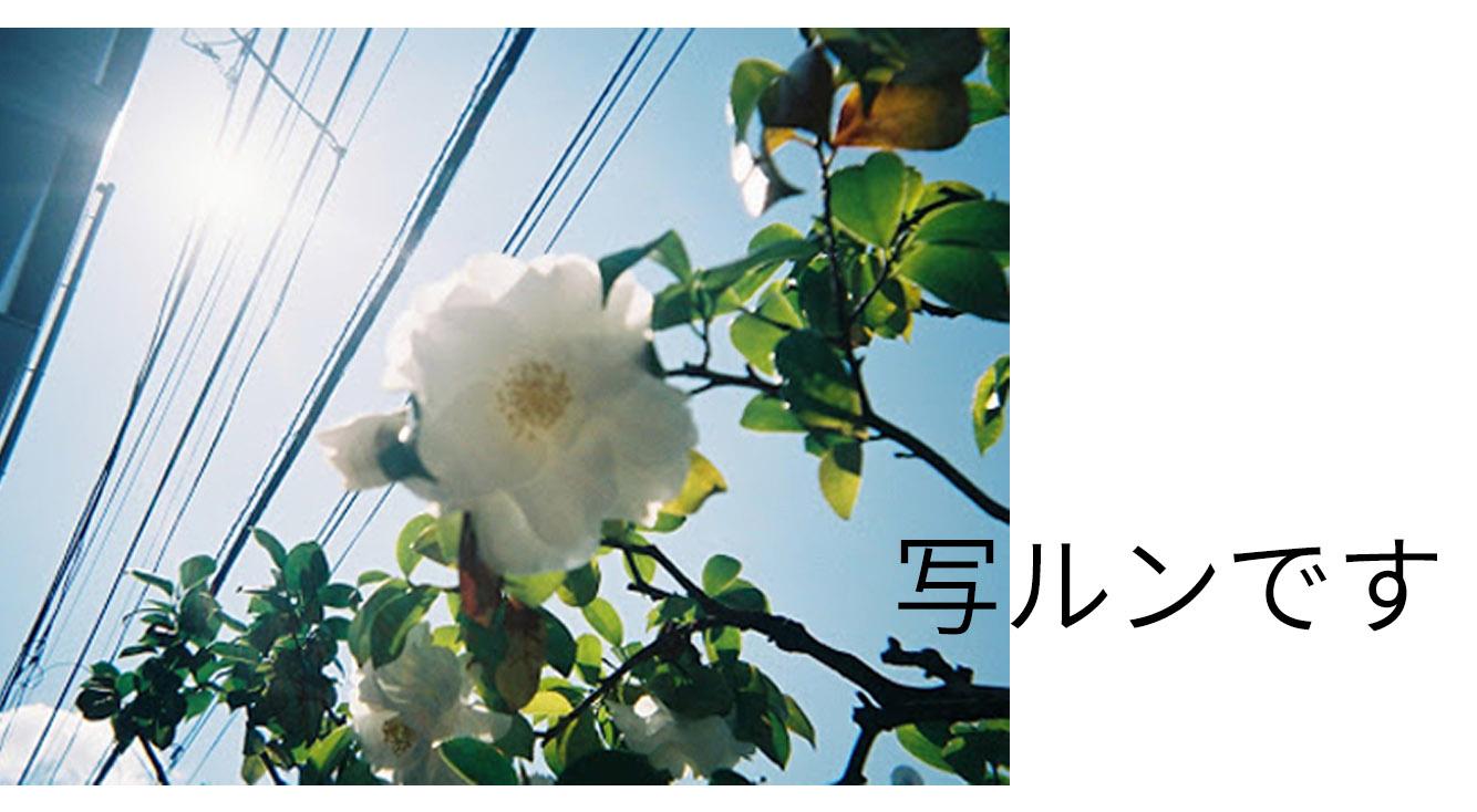 インスタでよく見かける『写ルンです』の写真がオシャレ!使い方やコツを教えます♡
